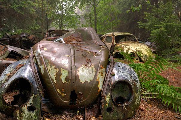 Masini 4 - boredpanda.com