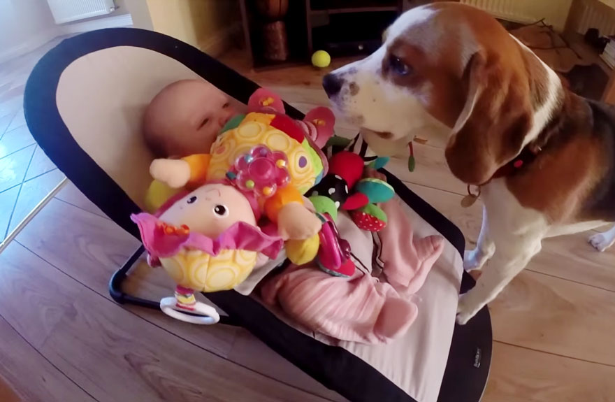 dog-returns-baby-toys-laura-charlie-7