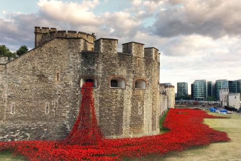 Flori in turnul din Londra 1