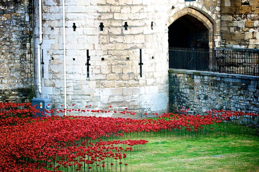 Flori in turnul din Londra 7