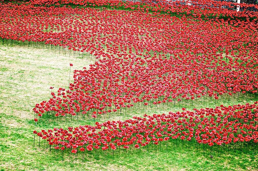Flori in turnul din Londra 8