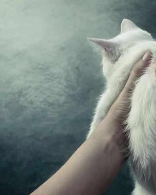 Campanie emoționantă pentru adopția animalelor