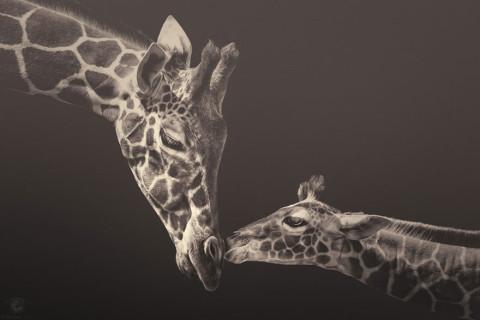 Fotografii cu specii rare sau pe cale de dispariție