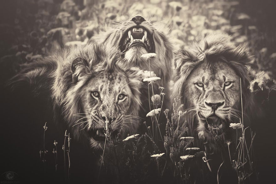 africa-souls-zoo-photography-manuela-kulpa-7