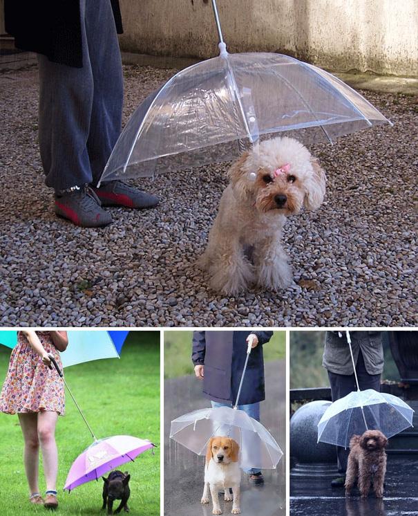 umbrela8