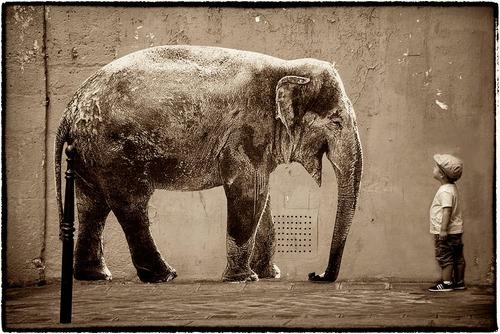 Portrete de animale într-un habitat neobișnuit