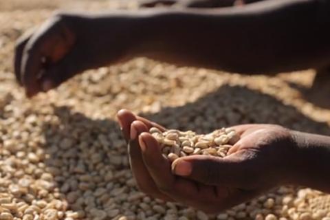 Povestea cafelei din Etiopia