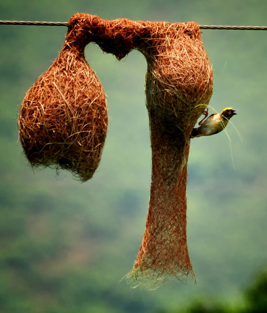 animal-architecture-nests-8-1