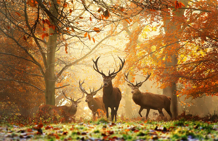 animals-in-autumn-14__880