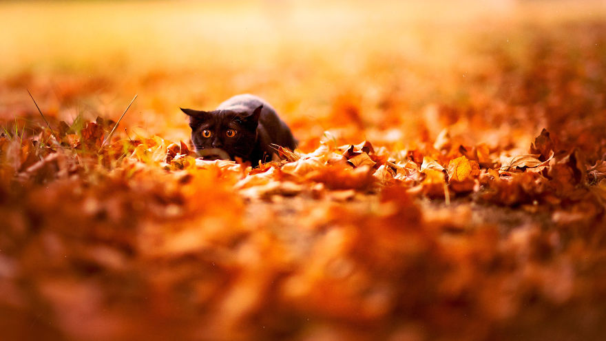 animals-in-autumn-210__880