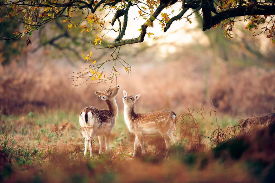 animals-in-autumn-45__880
