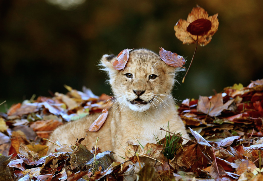 animals-in-autumn-8__880