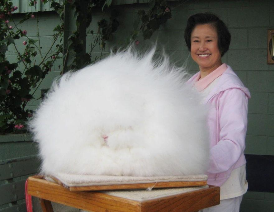 Animale cu blănuri fabuloase