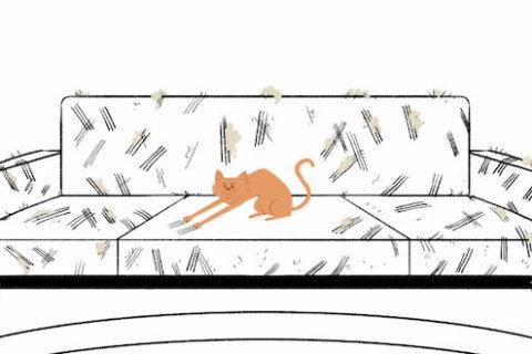 Ce face pisica ta cât nu ești acasă