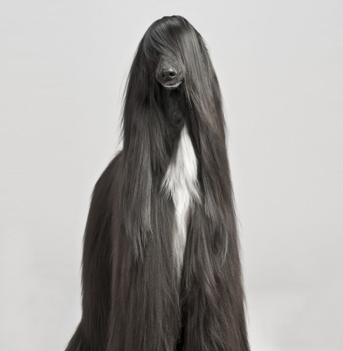 XX-Animals-That-Need-To-Get-A-Haircut-Real-Bad3__700