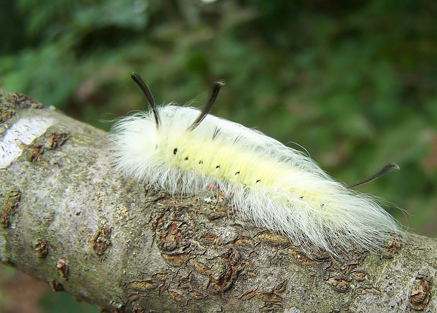 caterpillar-moth-butterfly-before-after-metamorphosis-15-1