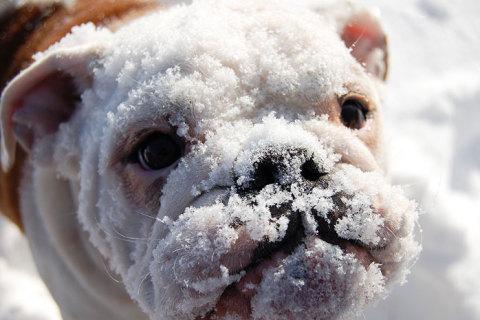 Animalele și zăpada