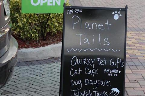 Cafeneau pentru feline