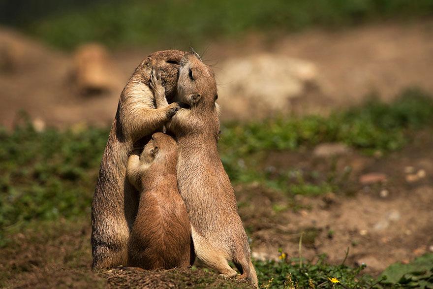 animal-love-friendship-22__880