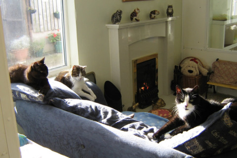 Lincolnshire-Trust-for-Cats-1