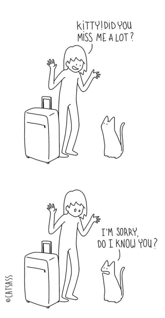Catsass-Me-my-pet-human-and-myself48__605