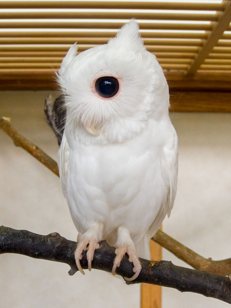 albino-animals-3-10__880