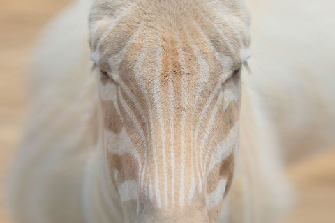albino-animals-3-24__880