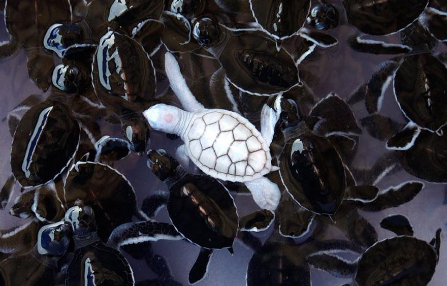 albino-animals-3-2__880