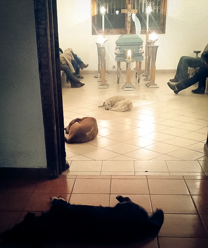 stray-dogs-pay-respects-funeral-animal-lover-margarita-suarez-yucatan-mexico-coverimage
