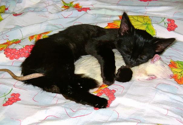 unlikely-sleeping-buddies-animal-friendship-210__605