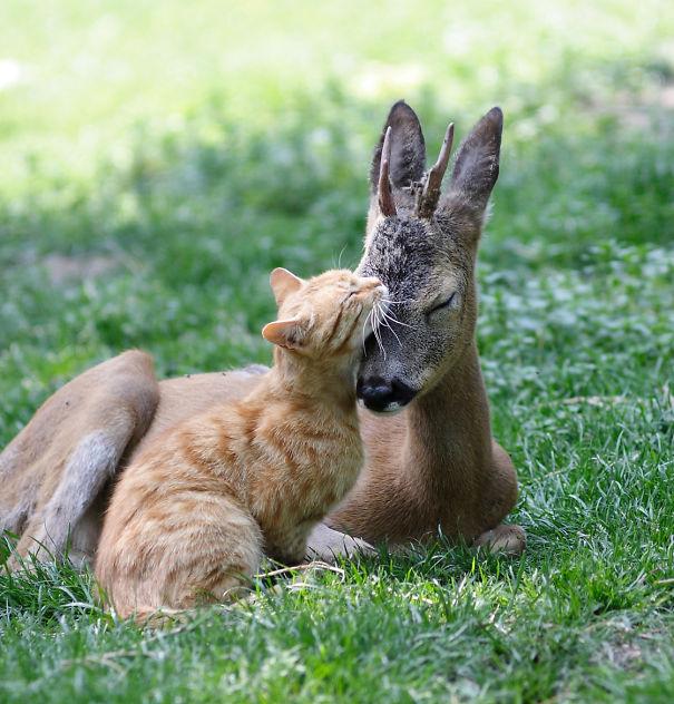 unlikely-sleeping-buddies-animal-friendship-271__605