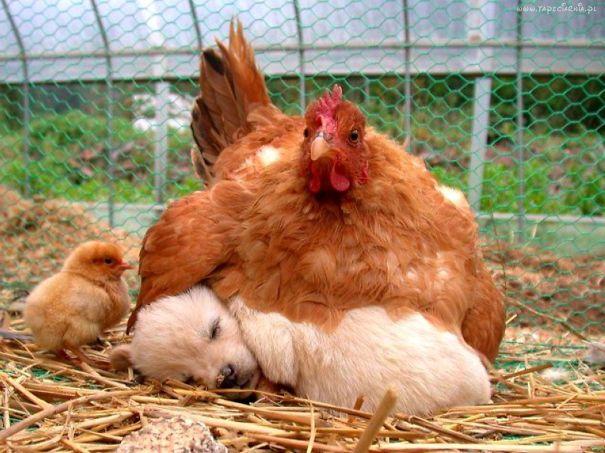 unlikely-sleeping-buddies-animal-friendship-311__605