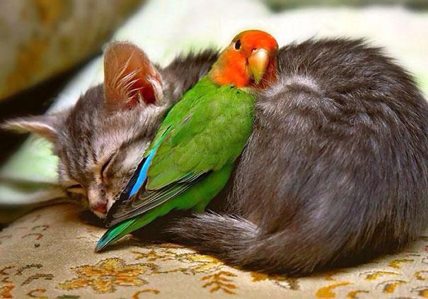 unlikely-sleeping-buddies-animal-friendship-431__605
