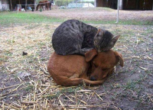 unlikely-sleeping-buddies-animal-friendship-48__605