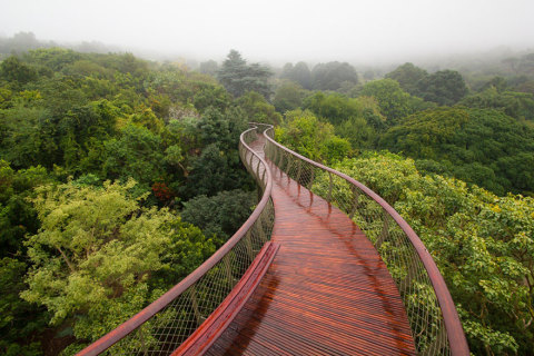 tree-canopy-walkway-path-kirstenbosch-national-botanical-garden-1