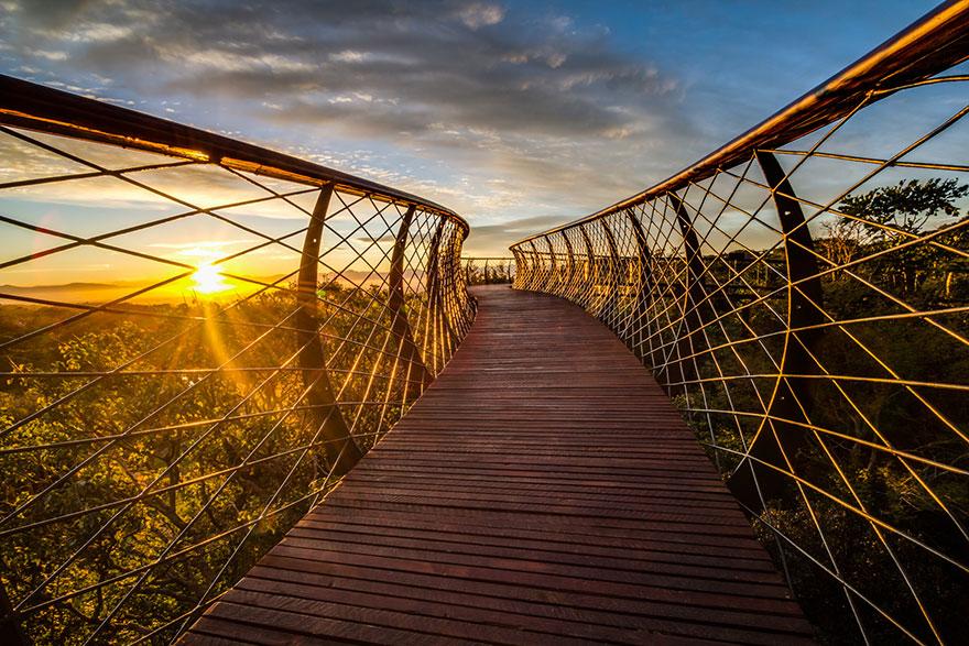 tree-canopy-walkway-path-kirstenbosch-national-botanical-garden-13