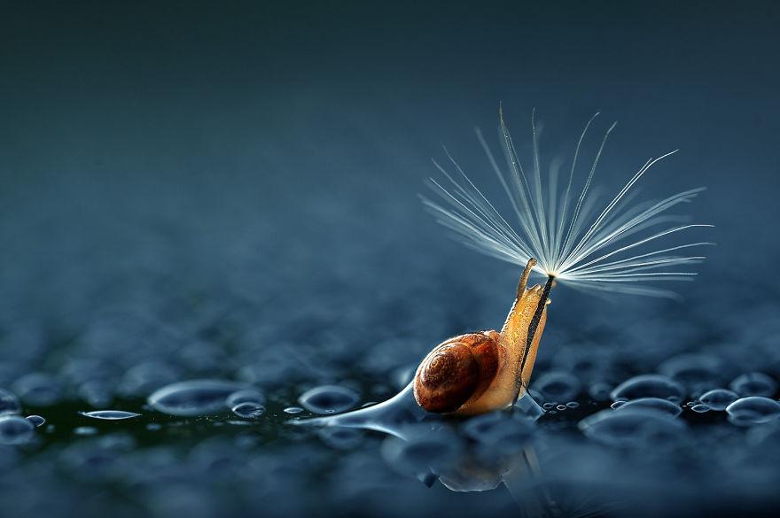 natural-umbrella-animal-photography-1__880