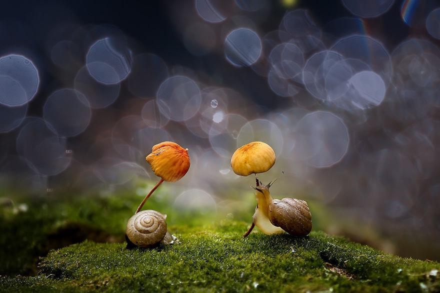 natural-umbrella-shelter-rain-animal-photography-19__880