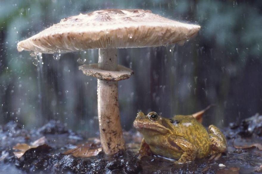natural-umbrella-shelter-rain-animal-photography-22__880