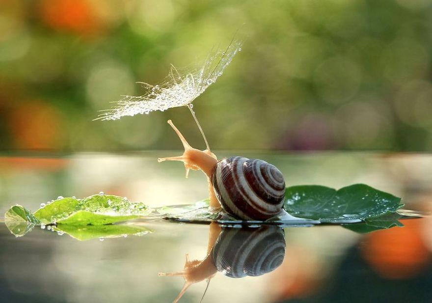 natural-umbrella-shelter-rain-animal-photography-25__880