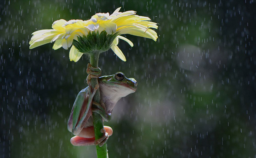 natural-umbrella-shelter-rain-animal-photography-27__880