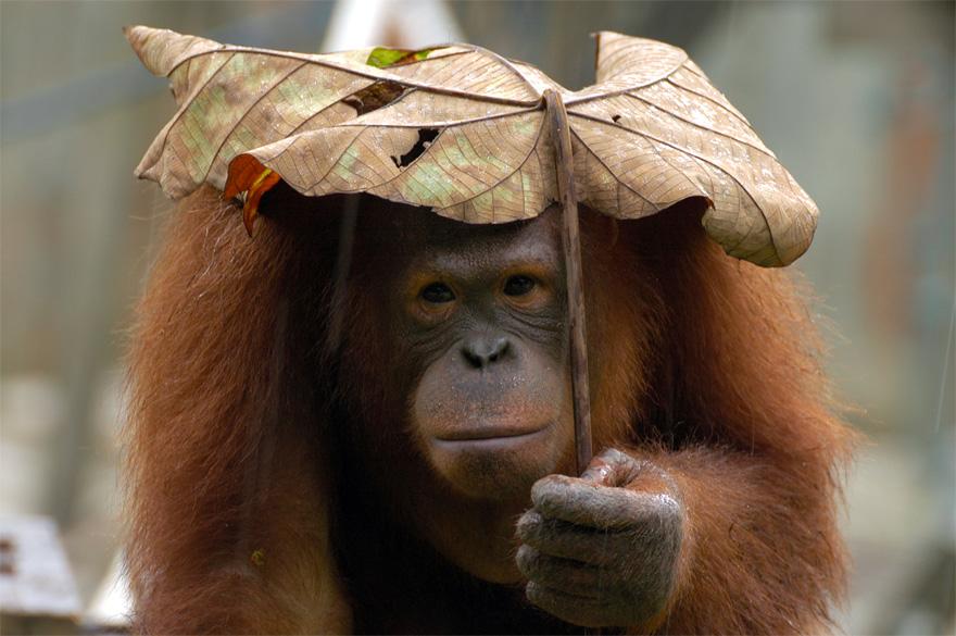 natural-umbrella-shelter-rain-animal-photography-3__880
