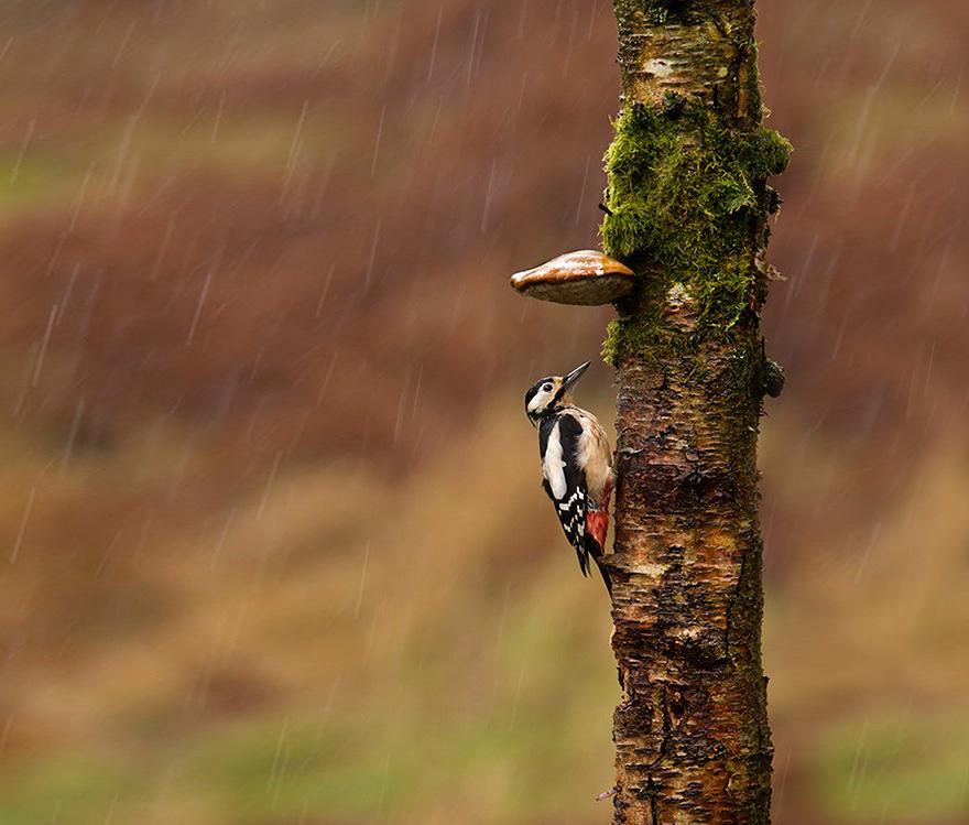 natural-umbrella-shelter-rain-animal-photography-5__880