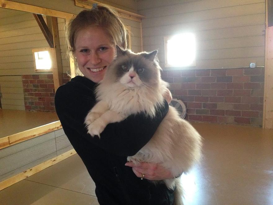 yoga-cats-shelter-adoption-homeward-bound-1