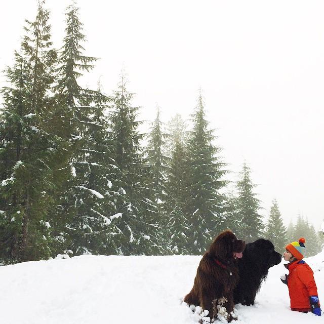 mom-photographs-son-dogs-horse-friendship-stasha-becker-julian-140