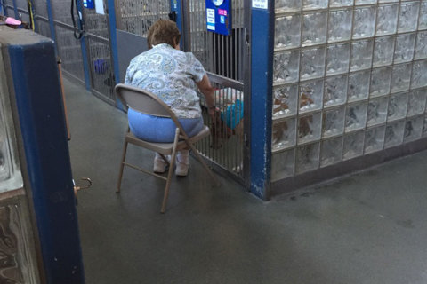 woman-reads-books-shelter-dogs-pittsburgh-1